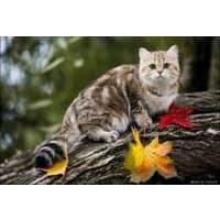 Можно ли домашних кошек выпускать свободно гулять на дачах